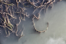 Close-up Of Swamp Plant