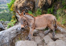 Donkey In The Wild