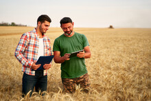 Two Farmers Stand In Wheat Stu...