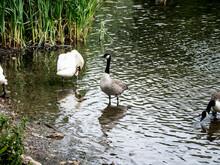 FEEDING TIME AT DARK LAKE