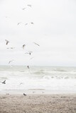 seagulls soar over the sea in cloudy weather. sky in the clouds with birds. storm at sea                         - 363350138