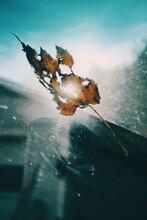 Sunlight Shining Through Autumn Leaf On Car Windshield