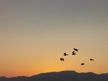 Silhouette Birds Flying In Sky...