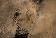 Extreme Close Up Of Mud Cruste...