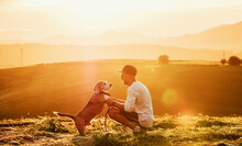 Middle-aged Man Dressed Light White Sweater And Jeans Shorts Walking With His Beagle Dog During Sunset Evening Time. They Playing On The Just Mowing Grass Meadow. Pets As Family Members Concept Image,