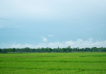 Green Field And Sky Landscape