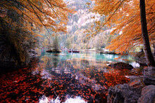 Scenic View Of Lake In Forest ...