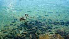Lone Pelican Gliding Across Cl...