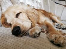 Close-up Of A Dog Sleeping At ...