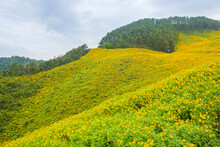 Scenic View Of Yellow Flowers Against Sky