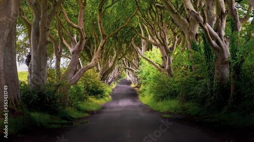 Billede på lærred Road Amidst Trees In Forest