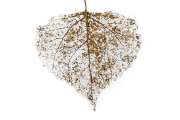 Closeup of a decomposed leaf with blur background