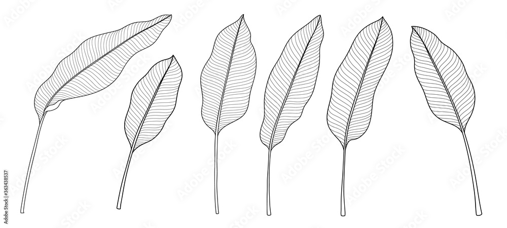 Fototapeta Exotic tropical leaf hand drawn vector. Botanical leaves, Canna leaves, banana leaf, black and white engraved ink art. Design for fabric, textile print and wrapping paper.
