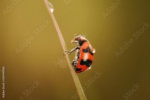 Close-up Of Ladybug On Twig Fotobehang