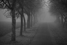 Trees On Footpath During Foggy...