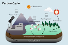 Diagram Of Carbon Cycle, Biogeochemical Cycle For Education Chart