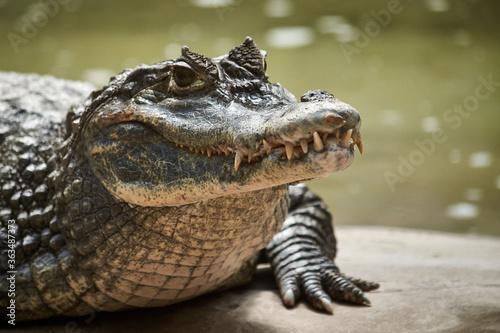 Canvas Close-up Of Crocodile At Lakeshore