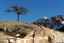 Scenic View Bare Tree With Snowcapped Mountains Against Clear Blue Sky
