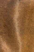 Background For Design, Cow Skin, Horse And Pig Skin Texture