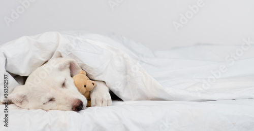 Fototapeta Puppy sleeps under warm blanket on the bed at home and hugs favorite toy bear. Empty space for text obraz