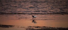 View Of Water Birds On Beach A...