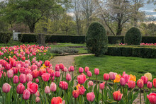 Tulip Garden At Hill Stead Mus...