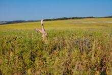 Beautiful Women's Feet Of Grass In Yellow Field