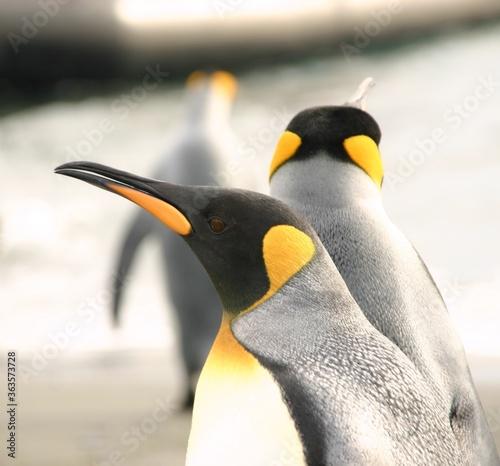 Foto Close Up Of Penguins
