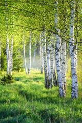 Panel Szklany Podświetlane Liście Spring green foliage