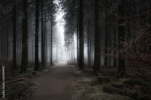 Footpath Amidst Trees In Forest - 363604947