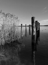 Wooden Posts And Reed In Lake ...