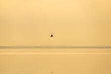 White Crane Flying In Air Near Lake Paliastomi, Poti, Georgia