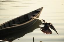 Closeup Shot Of An Eagle Flyin...