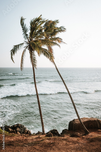 Palm Tree By Sea Against Clear Sky Wall mural