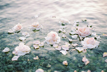 Roses On The Water