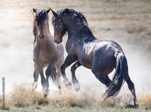 Cuadros en Lienzo Wild Mustangs
