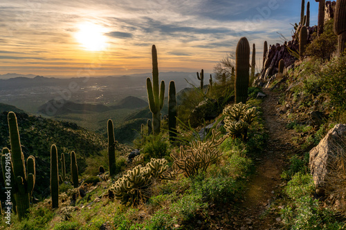 Cactus Growing On Field Against Sky During Sunset Wallpaper Mural