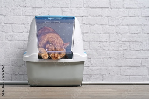 Cute Ginger Cat Going Out Of A Closed Litter Box Fototapet