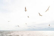 Birds Over The Sea During A St...