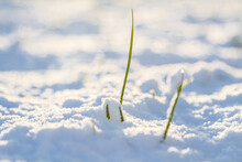 Close-up Of Frozen Plant On Fi...