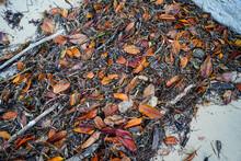 Vivid Orange Leaves And Sea Gr...
