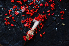 High Angle View Of Red Berries On Rock