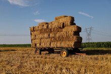 Hay / Straw That's Been Loaded Onto Trailers Right After Being Harvested And Bailed.