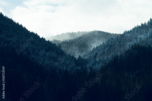 Scenic Mountain View With Forest Trees - 363723539