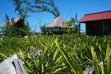 Tropical Landscape. Low Point ...
