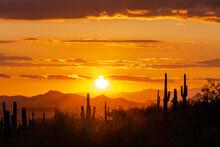Scenic View Of Silhouette  Saguaro Field Orange Sky