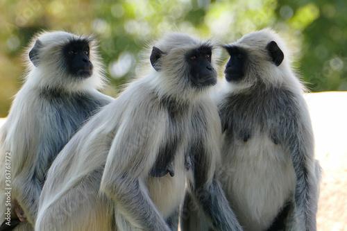 Fotografiet Close-up Of Gibbon Family