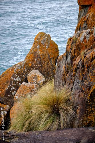 Fotografia, Obraz Coastal Tussock Grass Sheltered By Lichen Covered Granite Boulders