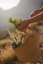 Close-up Of Hands Holding Wicker Basket