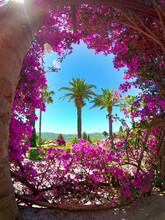 Palmiers En Provence Entourés...